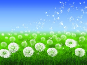 The Dandelion Effect Story